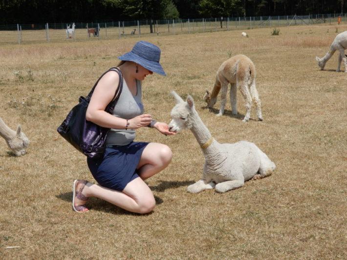 Alpacaboerderij, geweldig gezellig, blog
